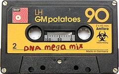 Amflora GM potatoes - DNA mega mix!
