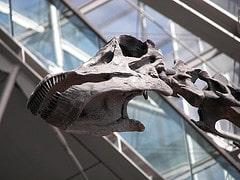 Dinosaurier im Hauptbahnhof