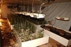 indoor-haschisch-plantage