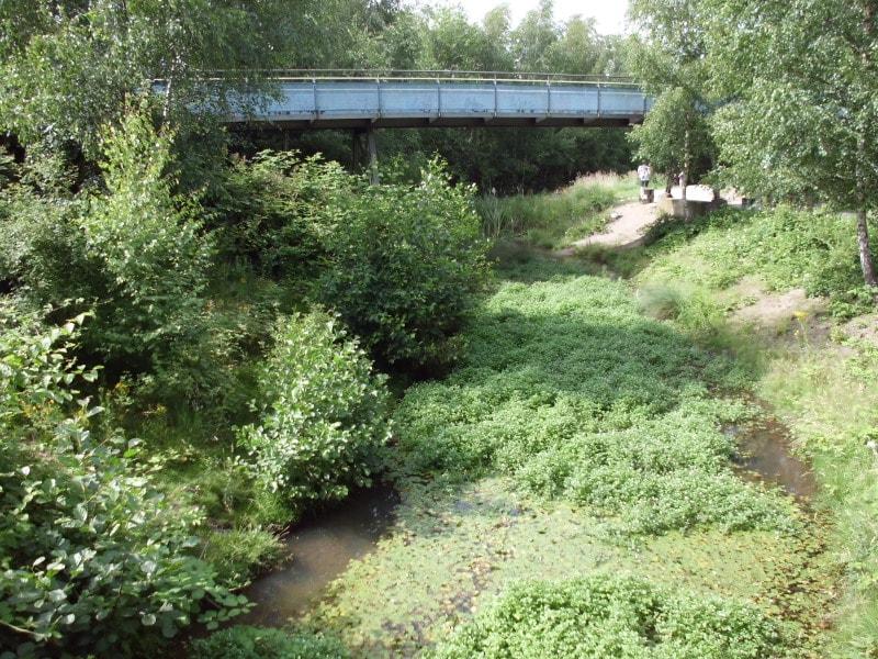Biotop 2 und eine weitere Brücke - (c) Reinhard Matern