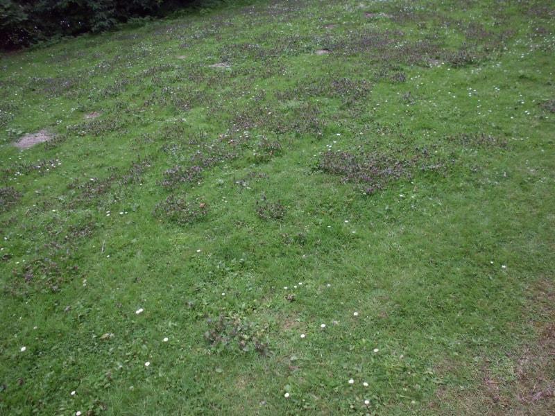Blumenbewuchs im Gras - (c) Reinhard Matern
