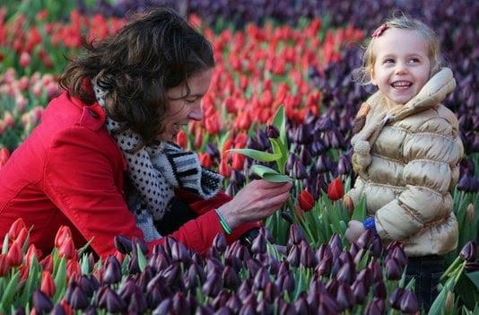 Bildquelle: Tulpenpromotie Nederland
